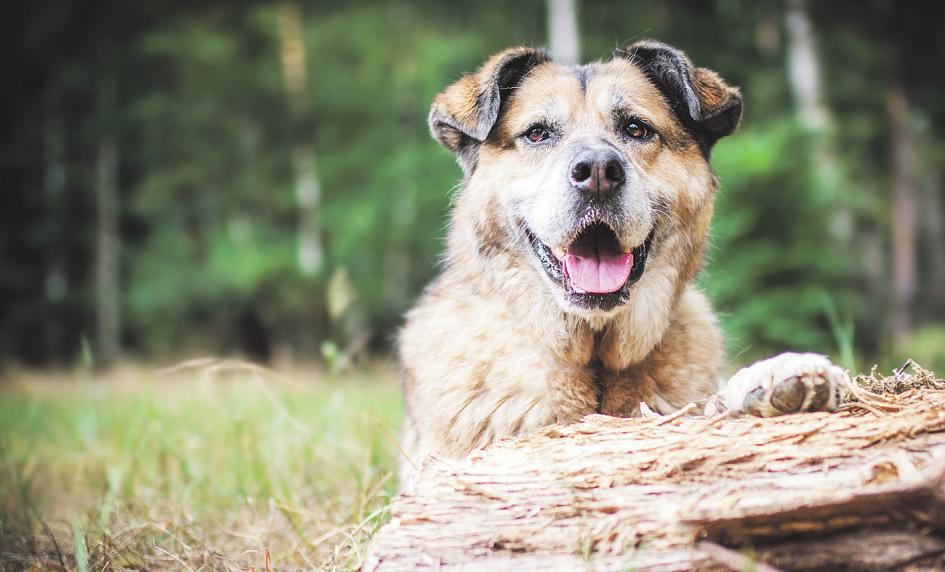 Auf der 2. Messe4dogs ist für jeden Hund etwas dabei Foto: Senta Banner