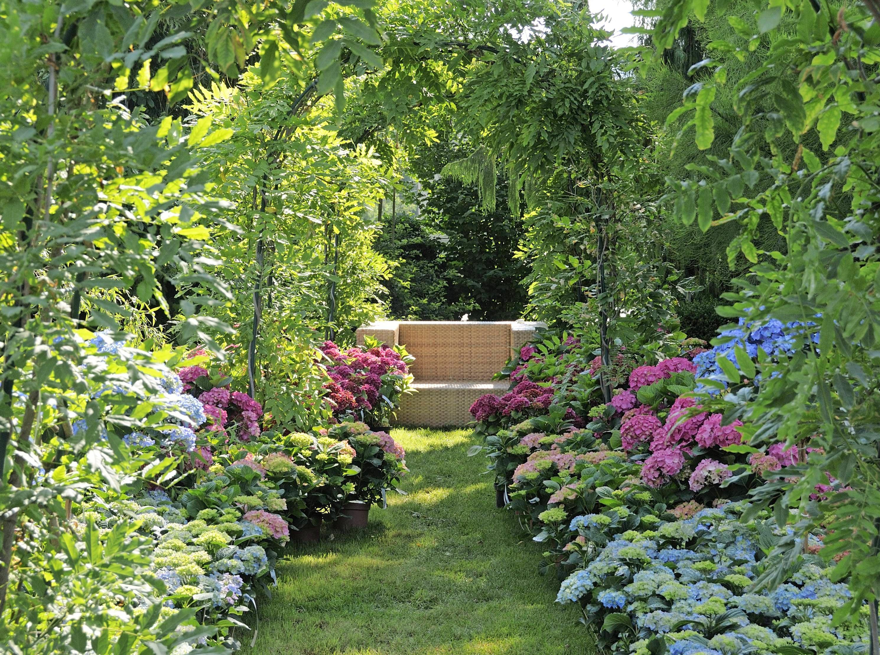 Schön im Schatten: Hortensien und Rhododendren sind pflegeleicht und anspruchslos.