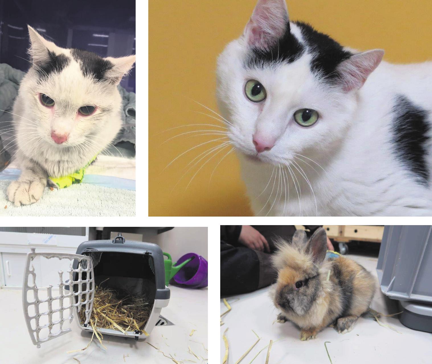 Dank liebevoller Pflege geht es Kater Smokey und dem ausgesetzten Kaninchen Scratchy wieder gut. Bilder: zvg