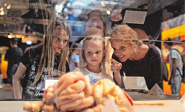 Die Plastinate im Heidelberger Köperwelten Museum geben Einsicht in den menschlichen Körper Bild: Körperwelten Museum