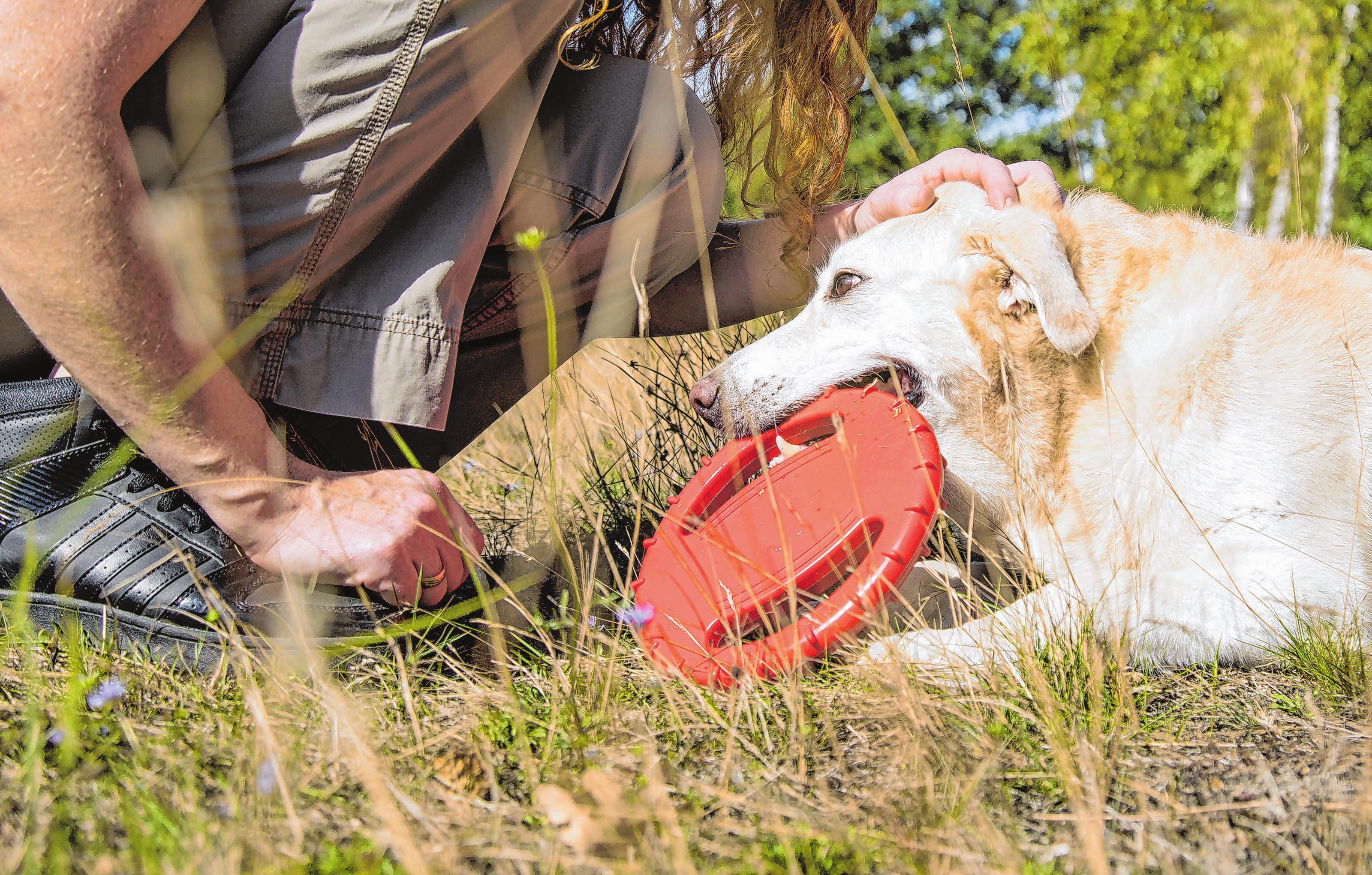 Gibt der Hund sein Spielzeug nicht wieder ab, dann sollte man ihm ein Tauschgeschäft anbieten, etwa ein Leckerli. Foto: Christin Klose/dpa-mag