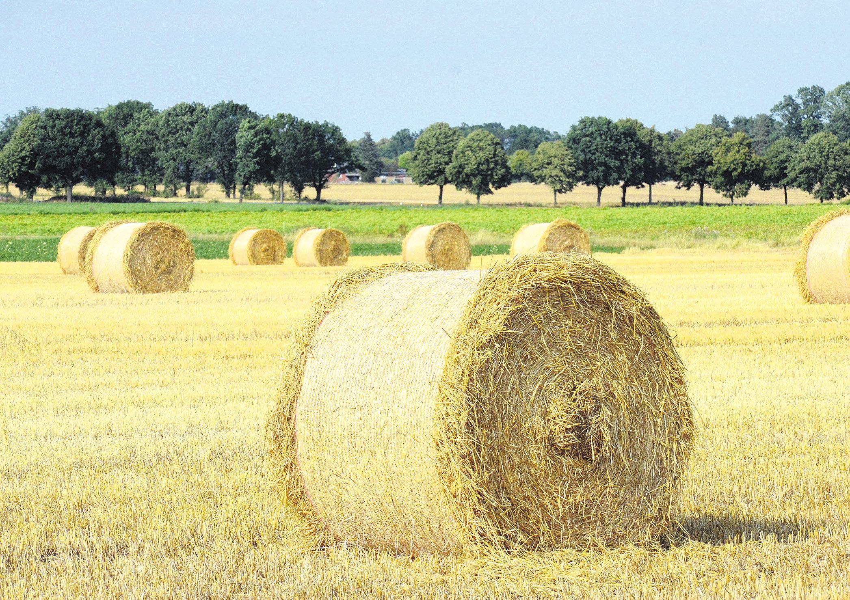Der Sommer 2019 ist bislang sehr trocken. Enorme Hitzeperioden und geringer Niederschlag erschwert insbesondere den heimischen Landwirten die Arbeit. Foto: Müller
