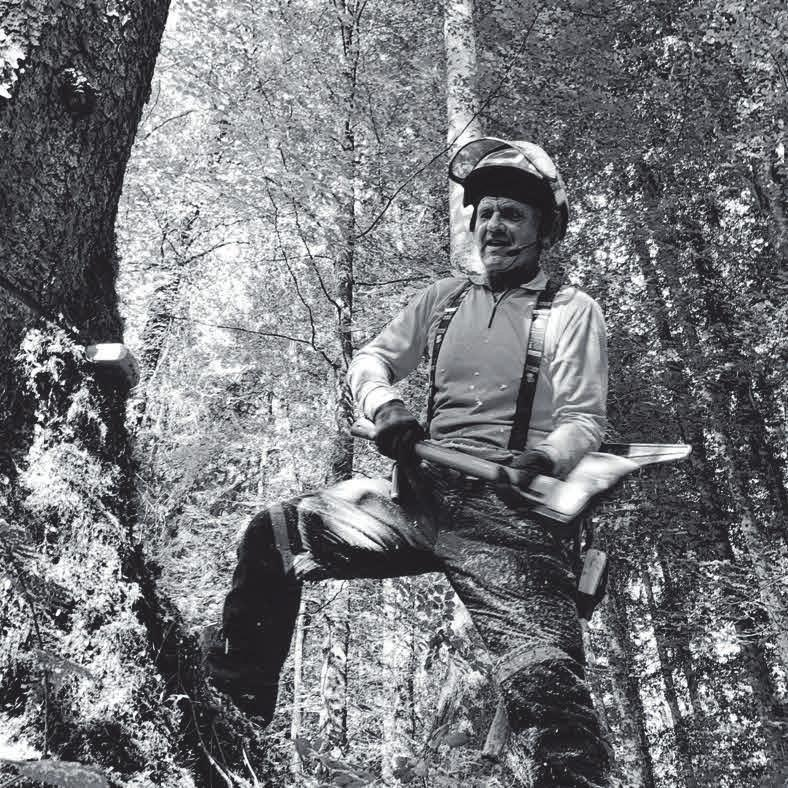 Im Einsatz für Wald und Holz Image 4