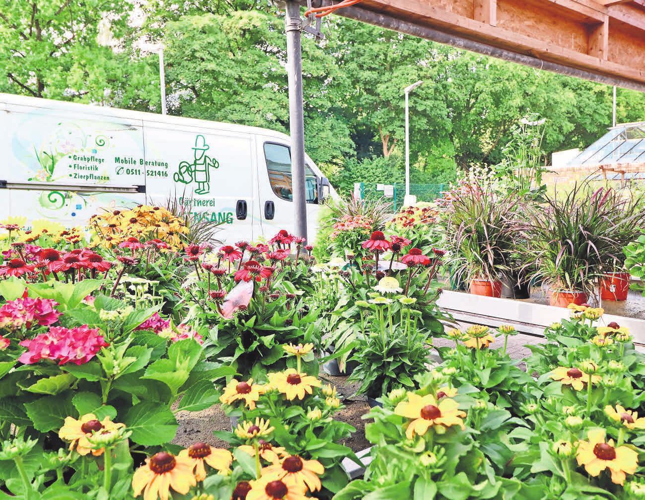 Spätsommer und Herbst liefern eine farbenprächtige Pflanzenkulisse für Terrasse und Garten.