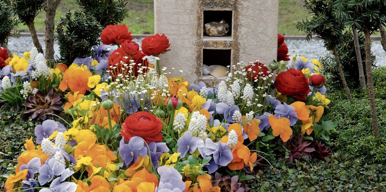 Wenn der Winter sich langsam verabschiedet, beginnt die Zeit der bunten, farbenfrohen Frühlingsbeete auf den Gräbern. Bilder: GdF, Bonn