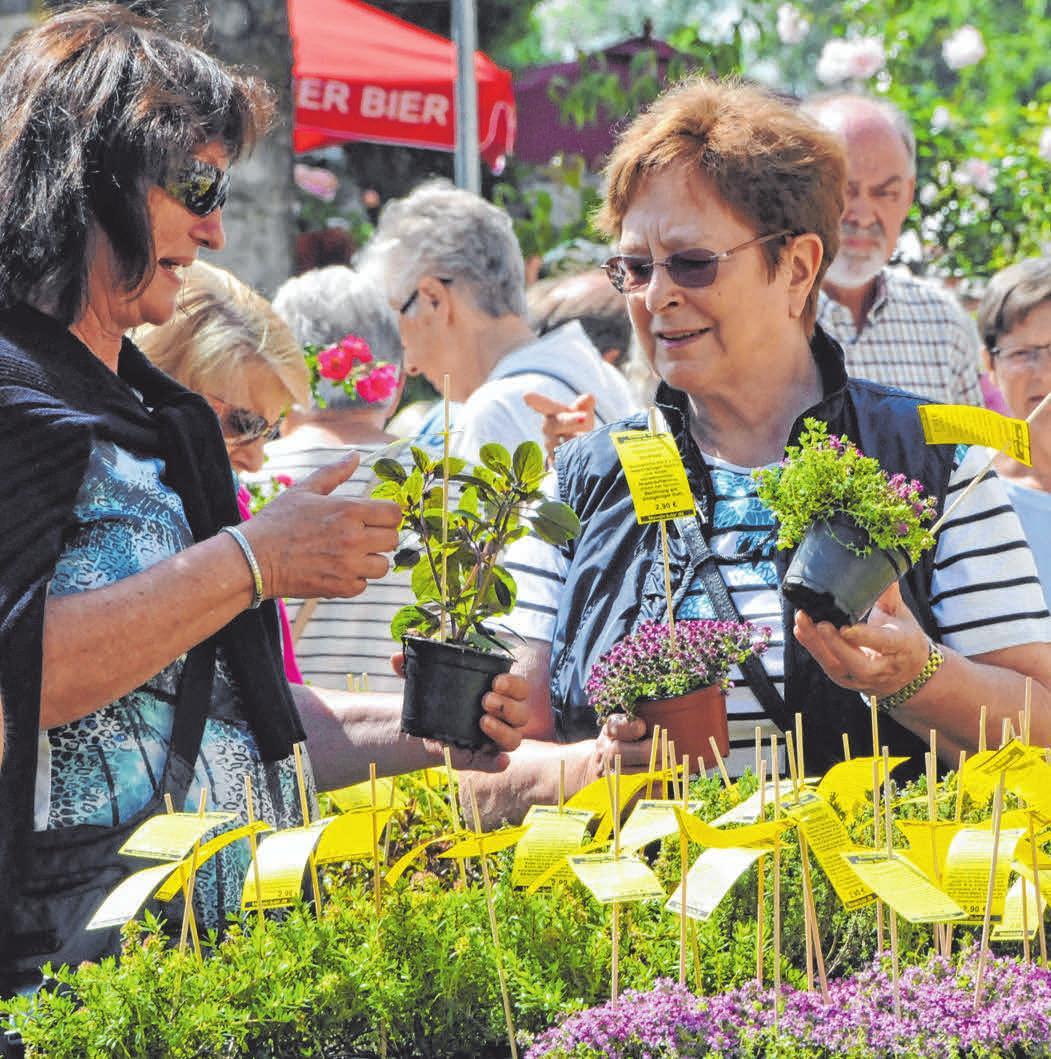 Auch andere schöne und nützliche Gartenpflanzen sind im Angebot.