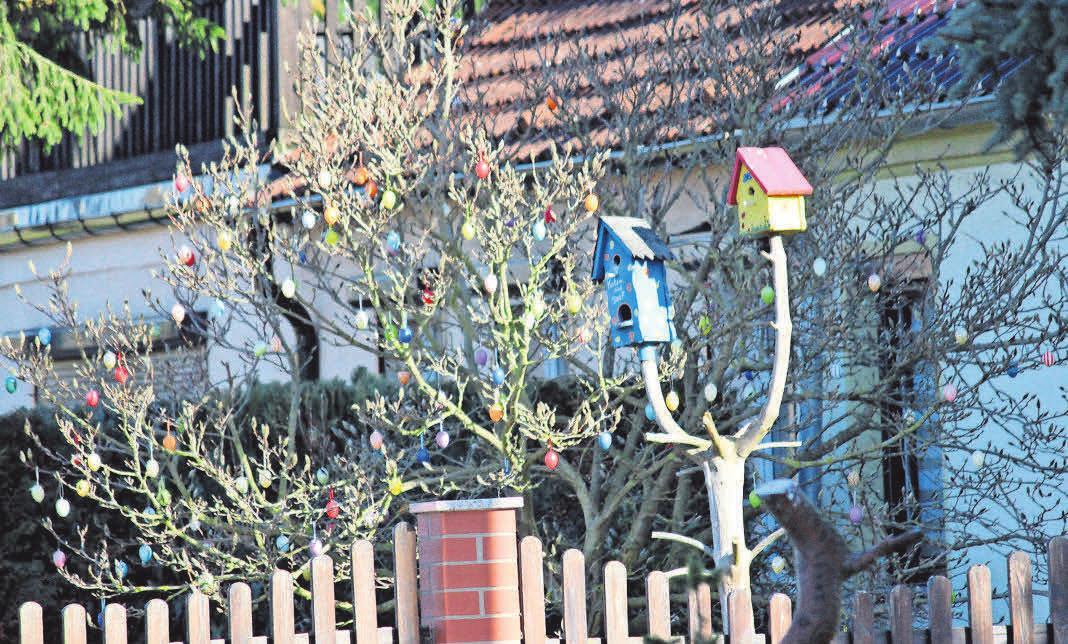 In der Dorfstraße in Radensleben haben die Zweige dieses Strauches viel zu tragen.