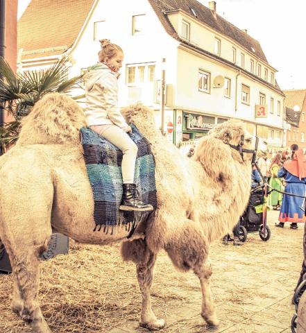 Eines der Highlights bei den Bopfinger Heimattagen ist das Kamelreiten.