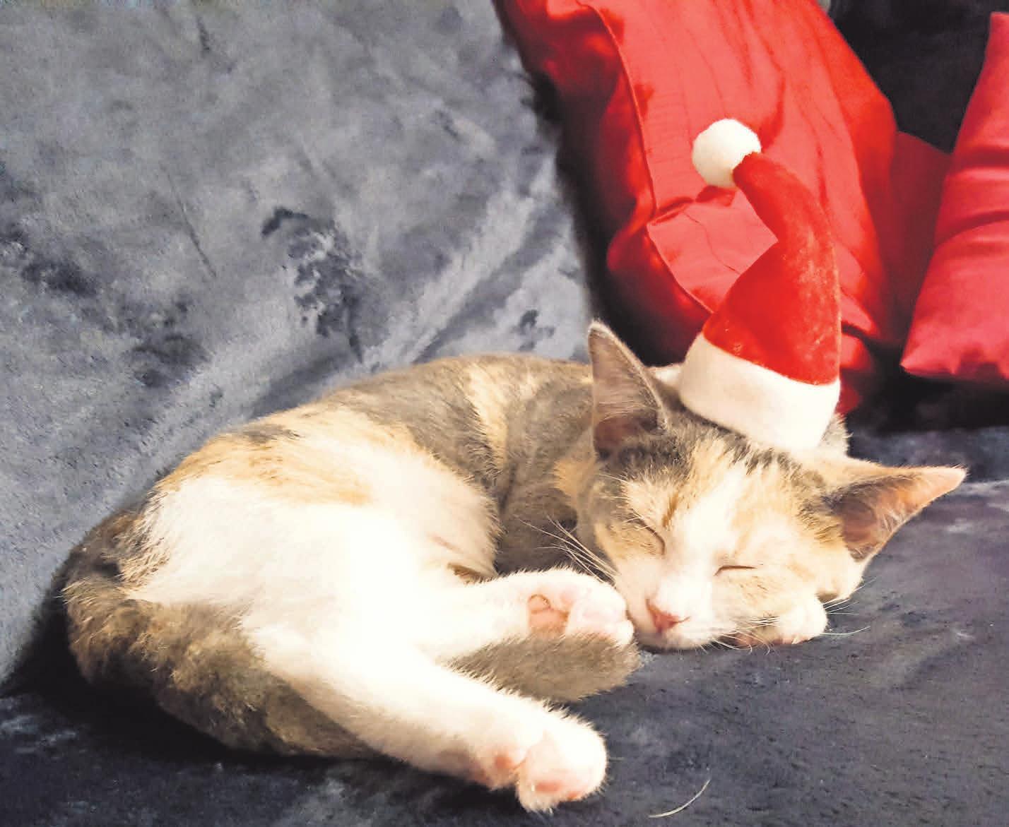 Auf ein friedliches Weihnachtsfest