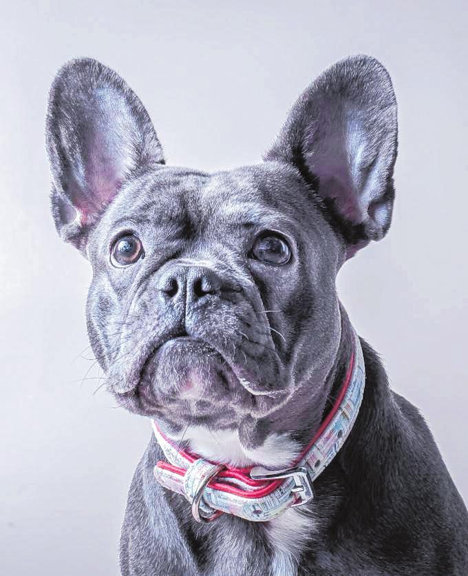 Fragender Blick: Im Zusammenleben mit dem Hund kann es auch zu Missverständnissen kommen. Die Vierbeiner reagieren übrigens am besten auf Gesten – wenn diese klar eingesetzt werden.BILD: ALEXANDRA DUSIN