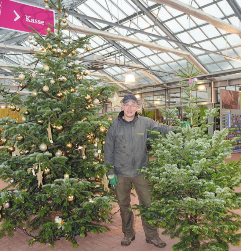 Florian Neumann bietet in Neumanns Gartenwelt in Tornesch nicht nur den richtigen Baum zum Fest, sondern auch alles, um ihn festlich zu schmücken Foto: Kuno Klein
