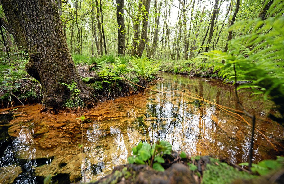 NATURSCHAUSPIEL Die Schwindequelle bei Soderstorf ist ein beliebtes Ausflugsziel für Einheimische und Touristen. Es ist die zweitwasserreichste Quelle Niedersachsens.