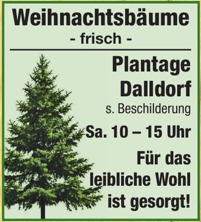 Weihnachtsbäume - Plantage Dalldorf