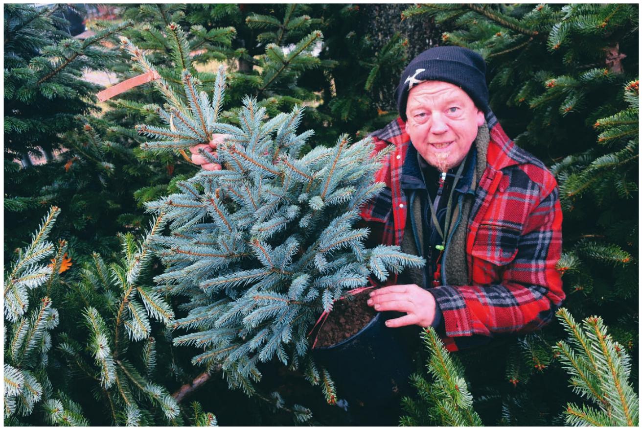 Soll die Tanne in den Garten gepflanzt werden, empfiehlt Holger Bublitz, auf einen genügend großen Topf zu achten und die Pflanze immer schön feucht zu halten Foto: Pöhlsen