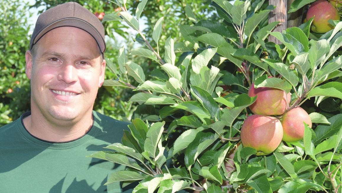 Bei Tim Plüschau auf dem Obsthof Plüschau in der Haseldorfer Marsch steht als nächstes die Apfelernte an, die mit einem Fest anlässlich der Apfeltage gefeiert wird Foto: Kuno Klein