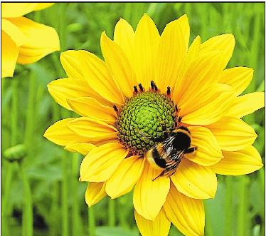 ... oder zu den Bienen.Fotos (3): TI/frei