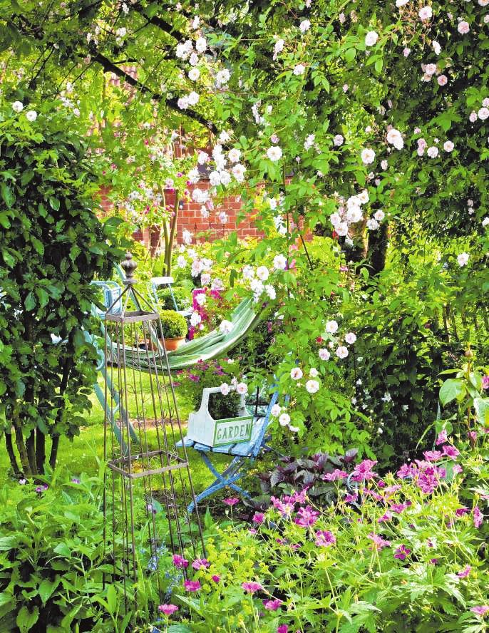 Ramblerrosen sind die heimlichen Protagonisten des Cottage- Gartens. Sie klettern in Obstbäume und bringen seine Äste zum Blühen.