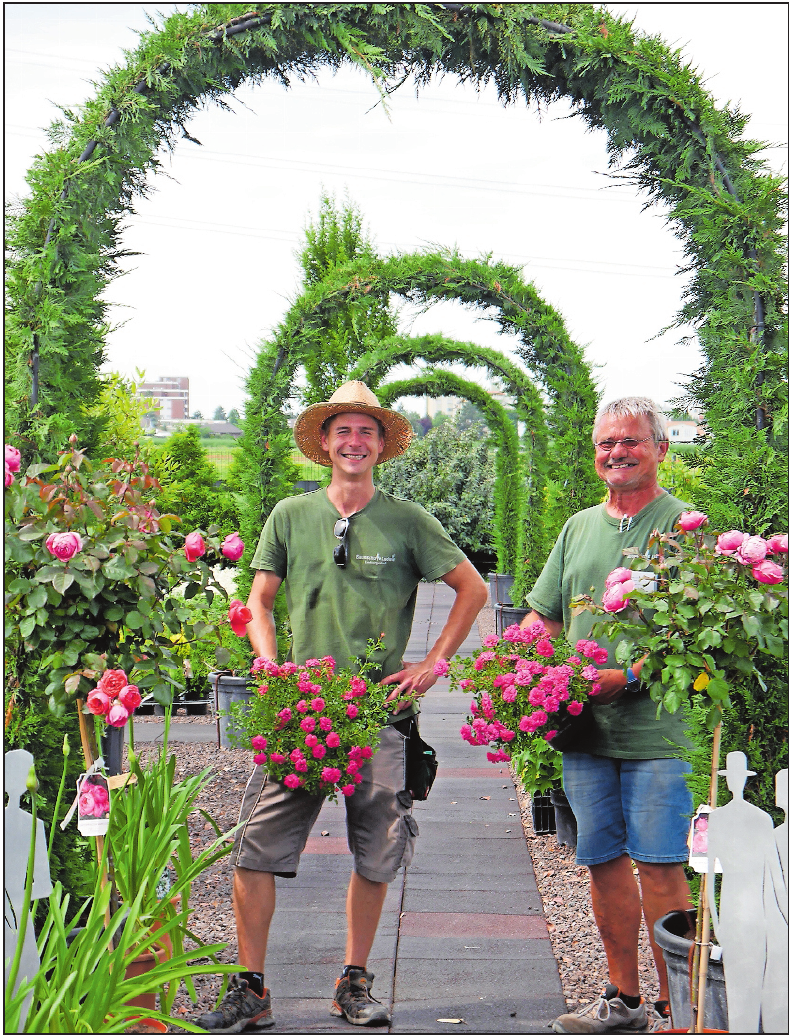"""Keine Rose ohne Stacheln: Gärtner Gert Bach (rechts) und Auszubildender Philip Graf präsentieren Buschrosen mit dem Namen """"Knirps"""", die für Halbschatten geeignet sind.FOTO: BRÄUNLING"""