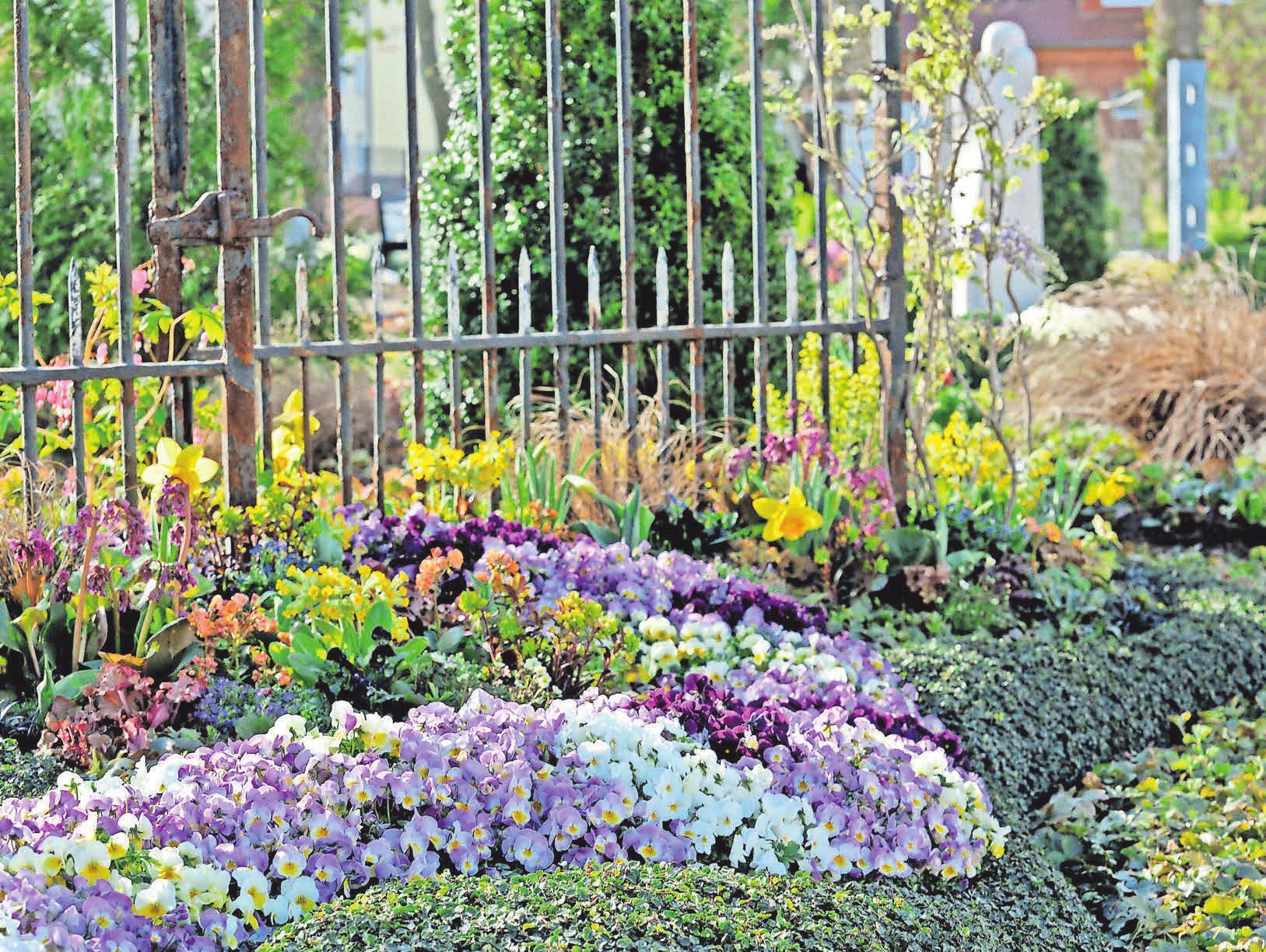 Eine farbenfrohe Pflanzenauswahl sorgt für eine frühlingshafte Stimmung auf dem Friedhof.     Foto: djd/Margit Wild