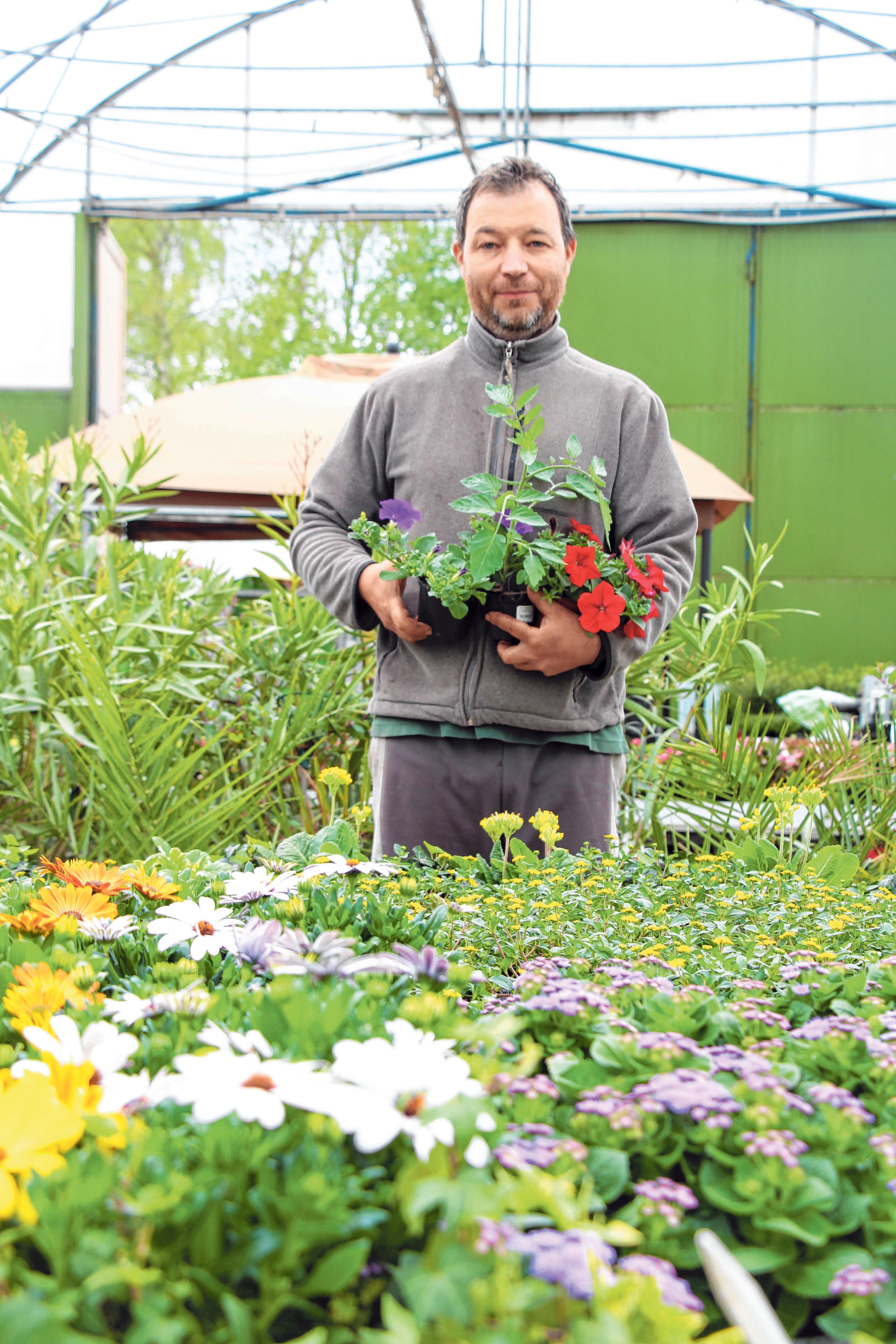 Christian Masetti bietet Gemüsesetzlinge und Blumen in großer Auswahl an. Foto: Schmidl