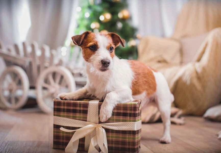 Als Familienmitglied bekommen selbstverständlich auch die vierbeinigen Lieblinge ein Geschenk zu WeihnachtenFoto djd/Agila/annaav - stock.adobe.com