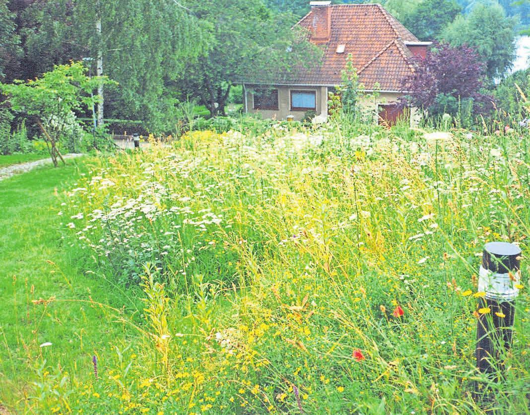 So könnte ein Gartenbereich aussehen: Links gepflegter Rasen, rechts eine Blumenwiese. Fotos: Eskildsen
