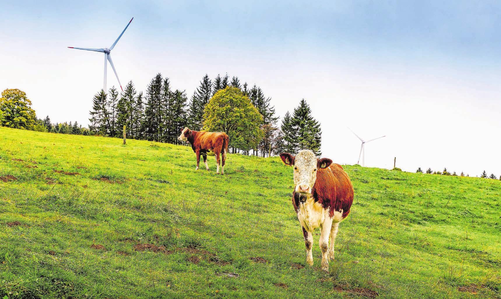 Es geht nur langsam vorwärts: Rund 300 Windanlagen befinden sich aktuell in einem langwierigen Bewilligungsverfahren oder warten auf einen definitiven Gerichtsentscheid. Bild: Getty