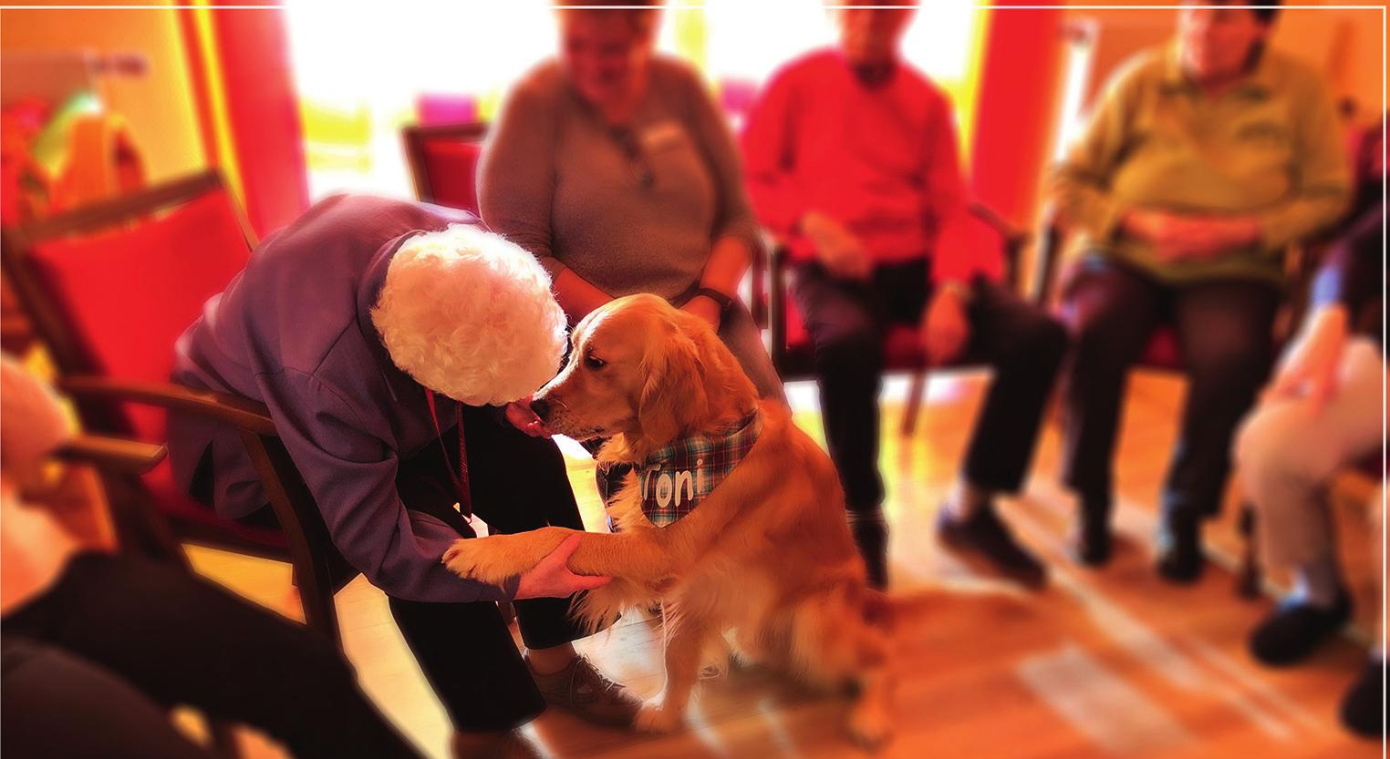 Toni ist ein ausgebildeter Therapiehund und beherrscht viele Dinge, die bei Besuchen und in therapeutischen Situationen helfen. Vor allem aber kann er eines: Mit unwiderstehlicher Freundlichkeit auf Menschen zugehen! Copyright@Peggy Poppen