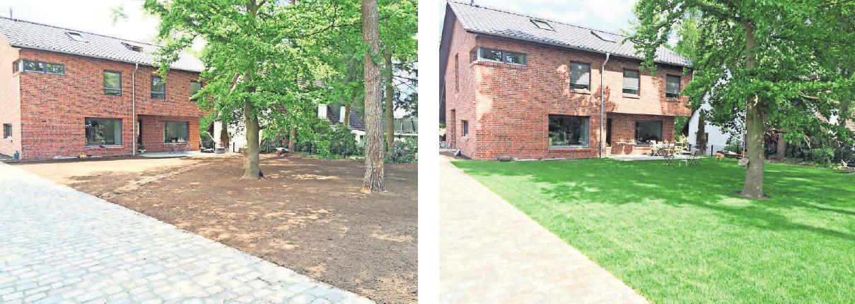 Rasen nach spätestens 14 Tagen kann man einen Rollrasen voll belasten.