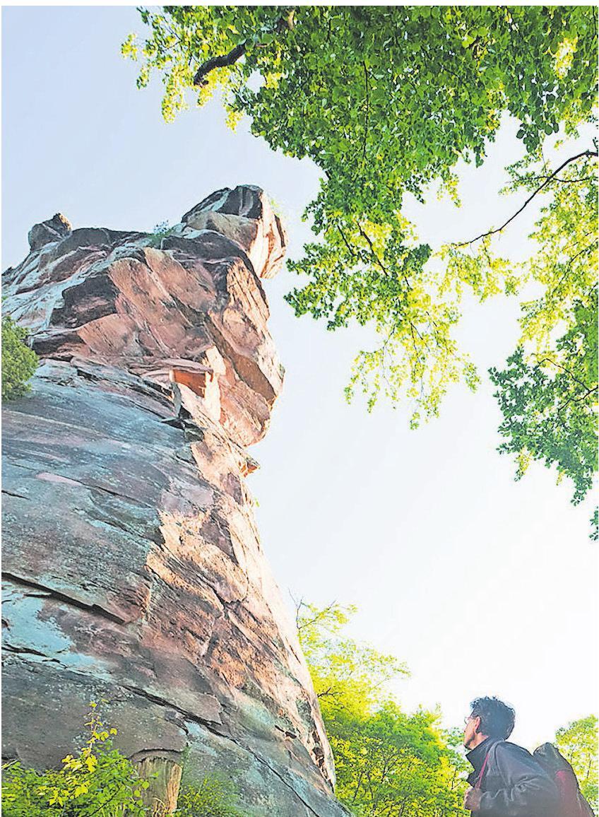 Im Pfälzerwald sind die Felsentürme aus Buntsandstein beliebte Ziele (unten rechts) und im Hunsrück zeigen die Ranger im Nationalpark den Besuchern einen Urwald von morgen (unten). Fotos: Dominik Ketz/Dominik Ketz für Merian/ Rheinland-Pfalz Tourismus GmbH