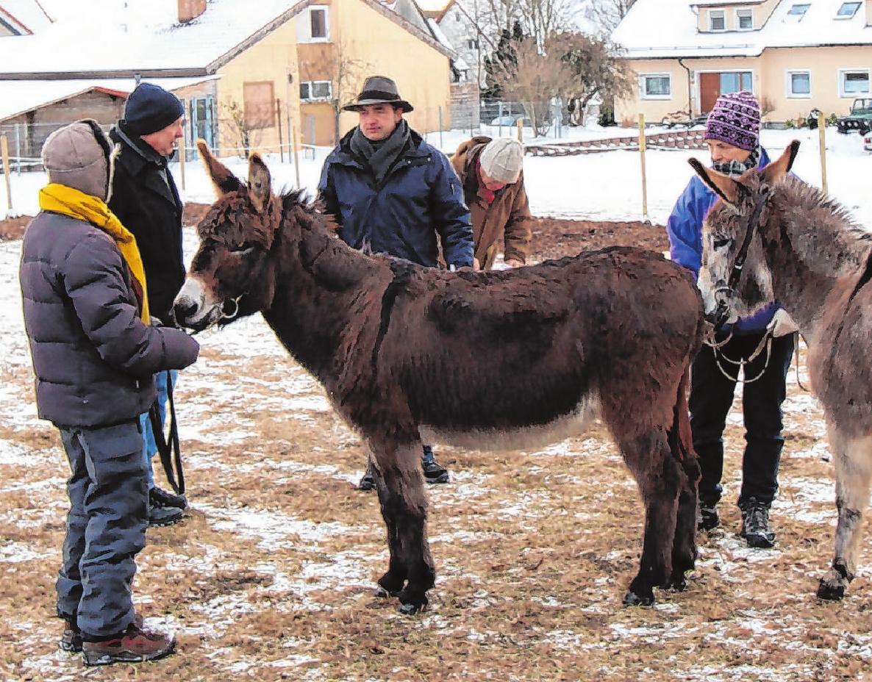 Ganz gleich ob es regnet oder schneit: Die Tiere werden bei jedem Wetter vorgeführt. Foto: NPG-Archiv