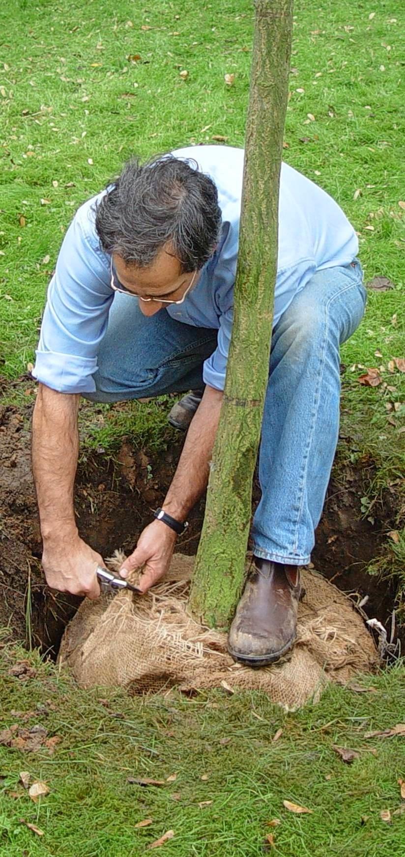 Kompost oder Hornspäne im Pflanzloch sorgen für reichlich Nährstoffe.