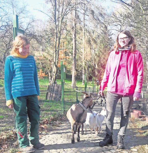 Azubi Stefanie Conrad und Föjtlerin Jessica Bernd haben viel Spaß mit den afrikanischen Zwergziegen im Elbe-Tier-Park Hebelei. Foto: Elbetierpark