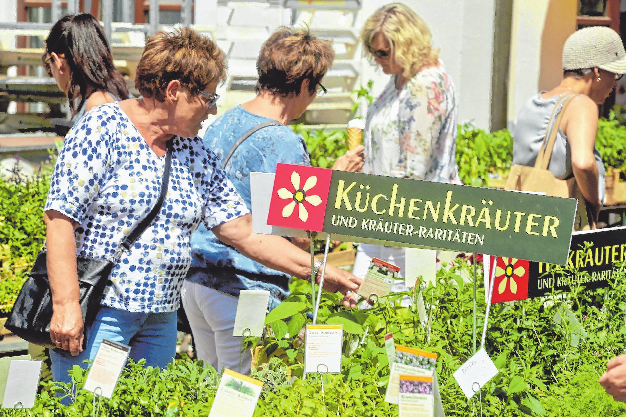 Das Angebot an Küchenkräutern ist groß und nicht nur das. FOTO: FERDINAND LEINECKER