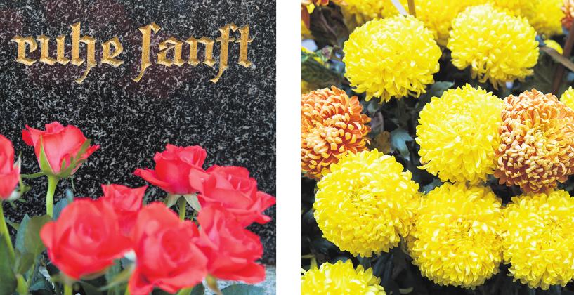 """Ein Abschiedsgruß am Grab: Die Rose steht für die Liebe. Dahlien überbringen am Grab die Botschaft """"Für immer dein""""."""