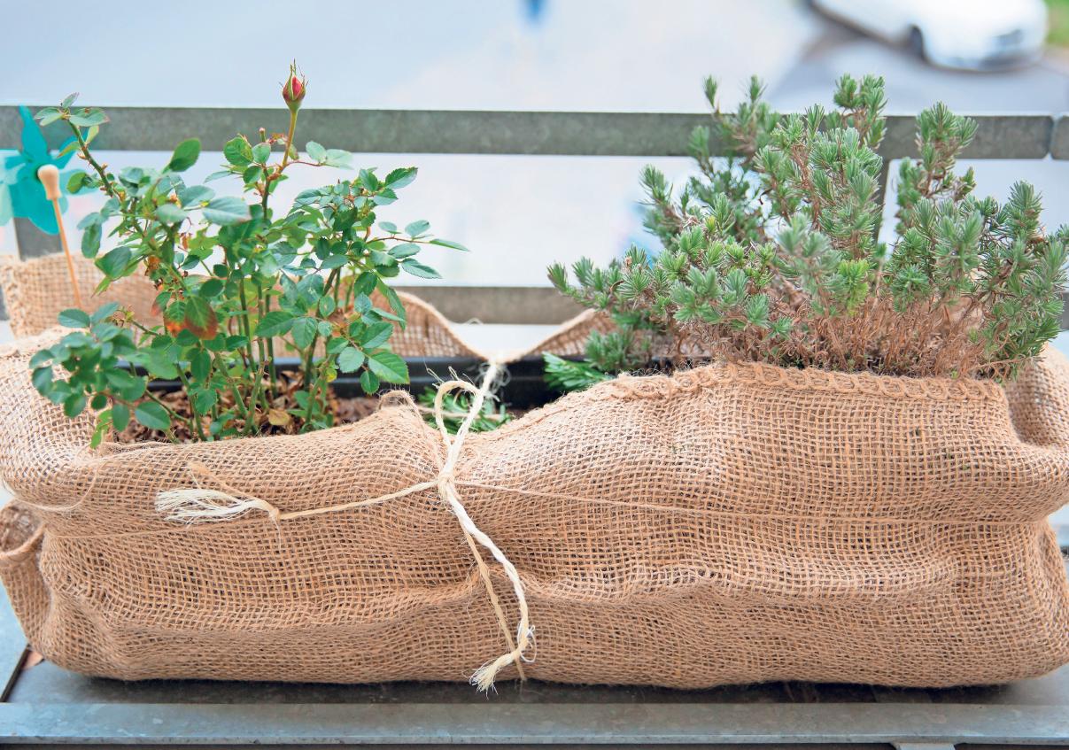 EINGEPACKT DURCH DEN WINTER: Viele Pflanzen auf der Terrasse sollten Hobbygärtner in der kalten Jahreszeit nicht sich selbst überlassen.