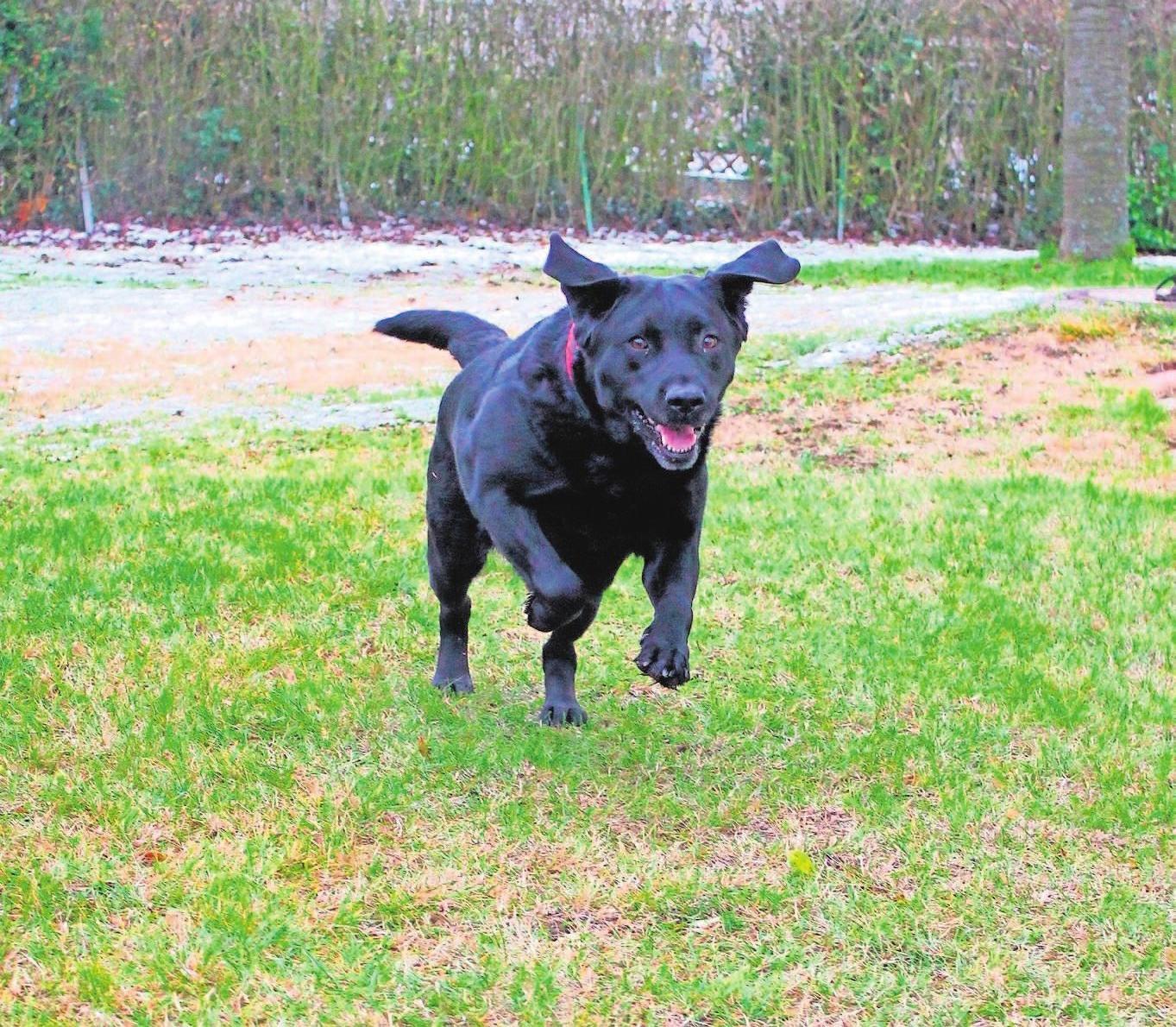 Hundehalter sollten eine extra Haftpflicht für ihren Vierbeiner abschließen. Foto: W&W
