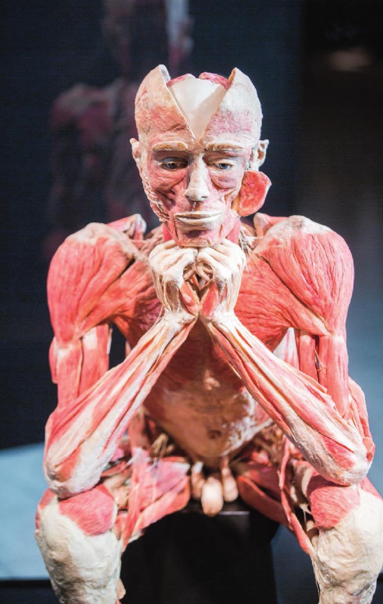 """Die Plastinat-Ausstellung """"Körperwelten"""" von Dr. Gunther von Hagens mit dem Schwerpunkt """"Herz"""" ist bis 5. Mai im Ulmer Blautal-Center zu sehen. Fotos: SWP"""