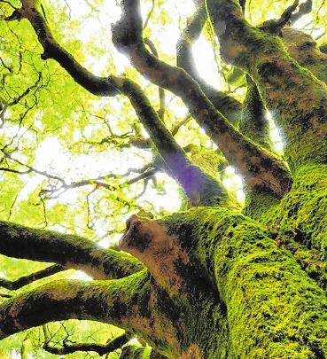 Wer Fantasie mitbringt, wird reich belohnt – der Zauberwald von Brocéliande lebt von und in der Vorstellungswelt der Besucher. FOTO: YVON BOELLE/BRTC