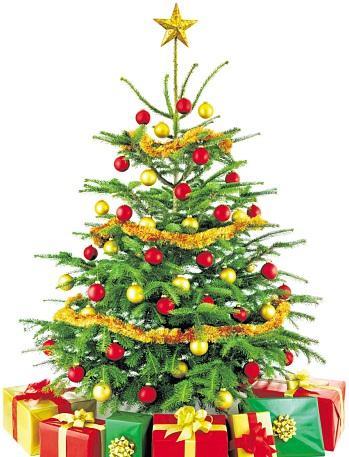Ein Weihnachtsbaum steht in fast jedem Wohnzimmer. FOTO:FOTALIA