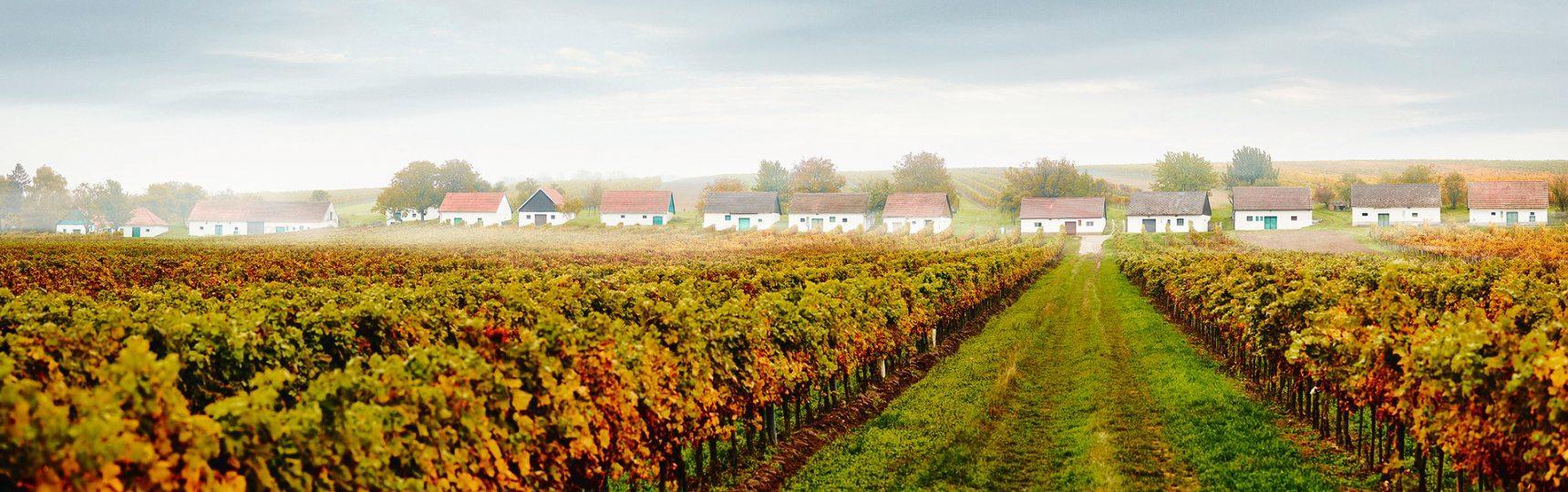 Von Frühling bis Herbst: Postkartenidylle und harte Arbeit prägen den Alltag in den blau-gelben Weinorten.Foto: NÖ Werbung/Michael Liebert