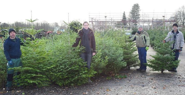 Das Team vom Baumschule-Nord-Shop bietet zu Weihnachten Nordmanntannen aus eigener Anzucht als Christbäume für das Fest anFoto: Kuno Klein