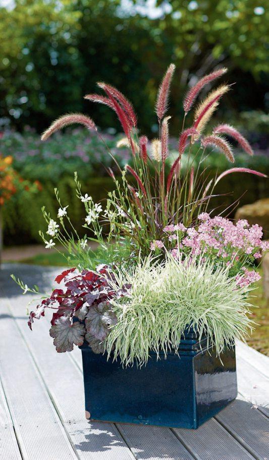 Mit ihren hübschen Blüten und ihrem schmucken Blatt sorgen Prachtkerze, Lampenputzergras, Elfenspiegel' Honiggras und Purpurglöckchen für Herbststimmung auf Balkon und Terrasse. Bild: GMH/FGJ