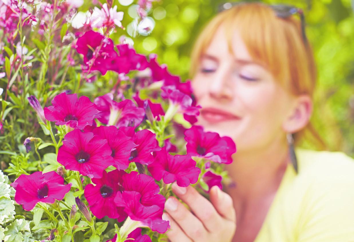 Sie rufen auch längerfristig positive Gefühle hervor und können so die Stimmung aufhellen. Foto: GrünesMedienhaus